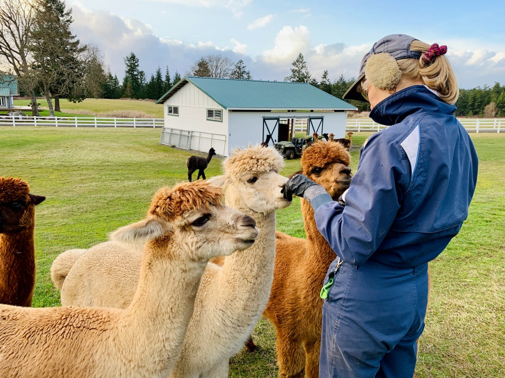 Alpaca Trekking & Scottish Scenery